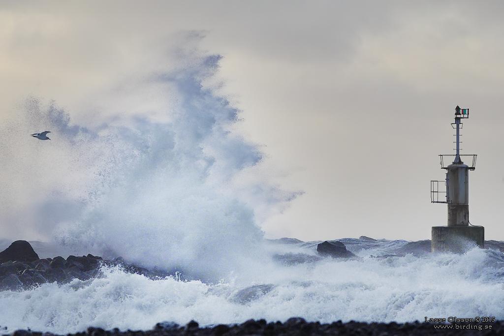 storm-glommen